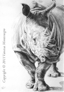 Rhino drawing pencil